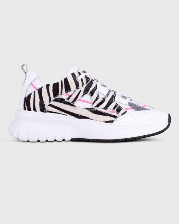 Jupiter Zebra